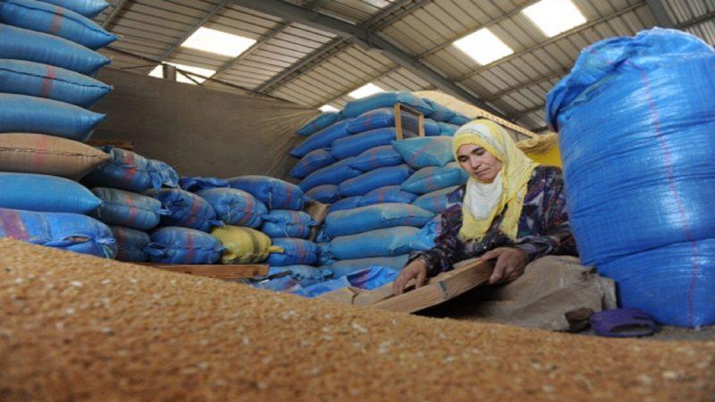 مخزون القمح اللين يغطي أزيد من 4 أشهر من حاجيات المطاحن