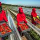 صادرات المنتوجات الغذائية