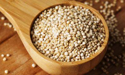 المغرب يسعى لرفع إنتاج حبوب الكينوا إلى 30 طنا في السنة